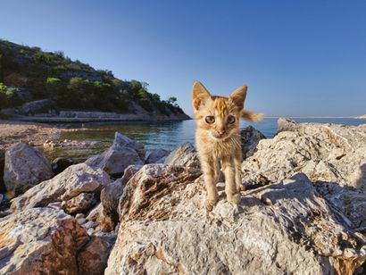 Un chat à la mer
